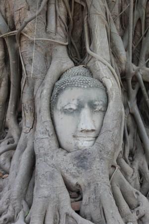 ワット・マハタート。木の根の中で穏やかな表情で眠る仏頭。盛者必衰を体現しているかのよう。