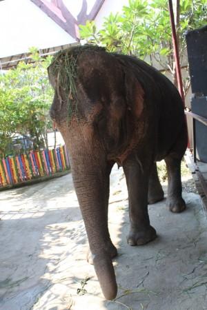 エレファントビレッジでは象へのエサやりや象乗り体験もできる。