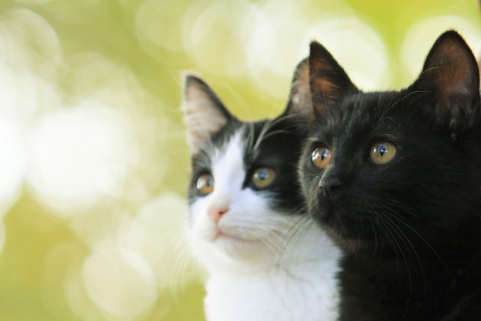 猫よん WEB用メイン